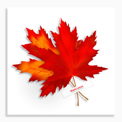 Two Maple leaves isolated on white background. Bright red autumn realistic leaves. Vector illustration eps 10