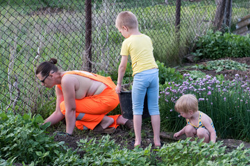 Slender young woman in orange working overalls weed in garden. Children help her mother and participate in work. Poured from yellow watering can. Harvest the grass. Cut the salad bow with scissors.
