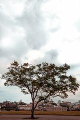 árbol en medio de la acera