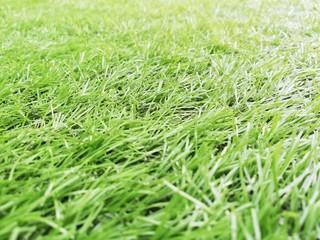 full Frame Green artificial grass.