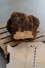 Giant and expensive rare black truffle mushroom
