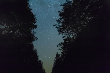 night starry sky view through the trees