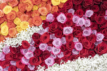 Pattern of red, orange, and yellow roses.