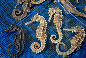 body and texture of dry seahorse