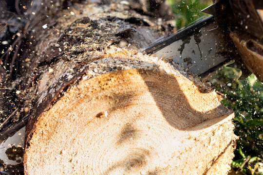 Cutting a log of wood with a chainsaw. Wood chips flying.