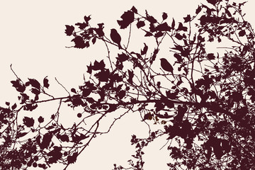 Silhouettes of branches of fruit tree in autumn