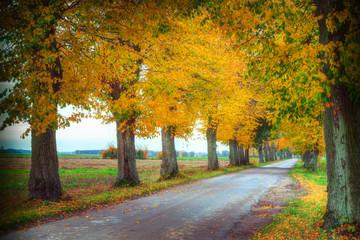 Canvas Prints Autumn Countryside road among the trees in autumn. Masuria, Poland. Analog style.