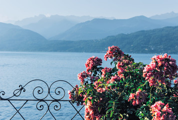 Red flowers with a lake and mountains in the background
