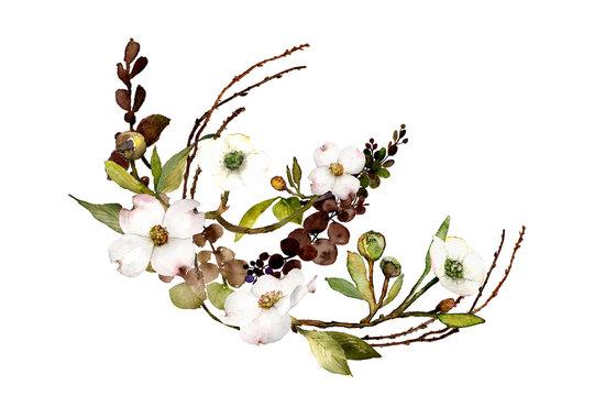 dogwood branch watercolor