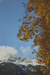 Herbst Baum in Innsbruck mit schneebedeckten Bergen