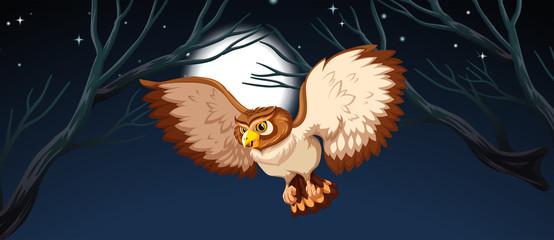 An owl hunting at night