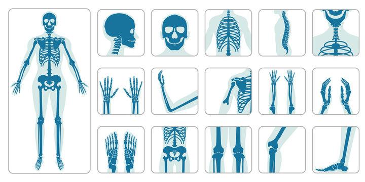 Human bones orthopedic and skeleton icon set