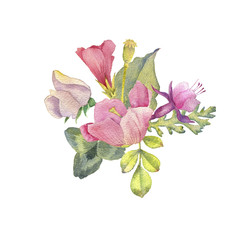 watercolor drawing flowers