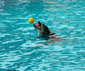dolphin in the water with balls