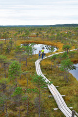 Three people family walking on wooden pathway over beautiful moorland with small pine trees and many ponds in kemeri national park Latvia summer 2018. Children educational outdoor activities concept.