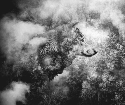 Black and White Collage: Wolf Head and the Misty Forest.