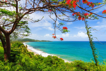 Wall Murals Caribbean Beautiful tropical summer view of Puerto Rico with red flowers and a white beach