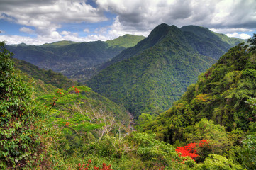 Beautiful view over the El Yunque national forest in Puerto Rico