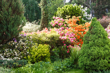 Decorative trees. shrubs and flowers in the garden: spruce, arborvitae, pine, fir, juniper, rhododendron