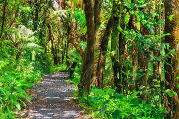 Beautiful jungle path through the jungle of the El Yunque national forest in Puerto Rico
