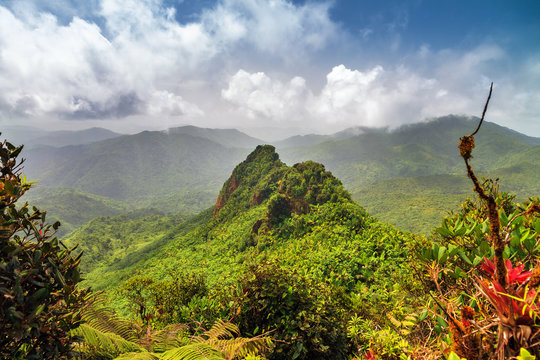 Beautiful view of the hills with fog in the jungle of the El Yunque national forest in Puerto Rico