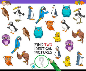find two identical bird pictures game for kids
