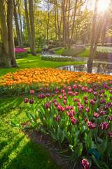 Deurstickers Groene Keukenhof flower garden. Lisse, the Netherlands.