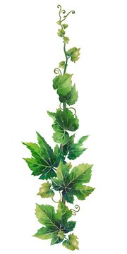 Watercolor branch with grape leaves and curly elements