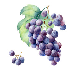 watercolor fruit branch grape