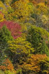 奥飛騨温泉郷の秋の景色