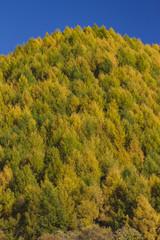 黄葉する山