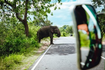 Elephant sauvage du Sri Lanka le long de la route nature