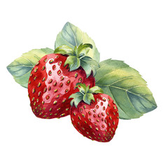 watercolor strawberry with leaf on white background