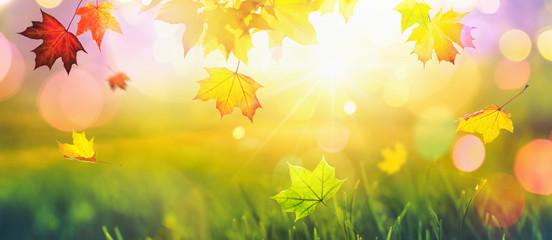 Falling Autumn Maple Leaves Natural Colorful Background. Fall Season