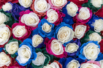 Large multi-colored roses.