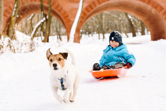 Dog pulling sled with happy child at winter park