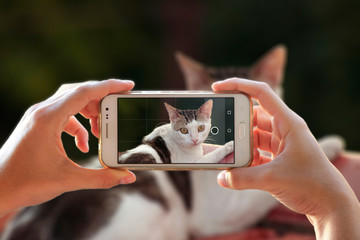 A person photographing her cat with a cell phone. Woman taking a photo with the camera of a smartphone.