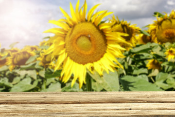beautiful sunflowers and an old table