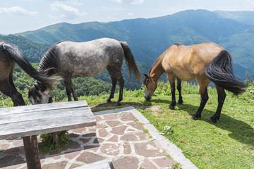 Mountain horses to Eho hut. The horses serve to transport supplies from and to the hut.