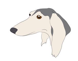 dog portrait profile, look down