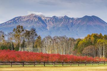 秋の木曽馬の里と御嶽山