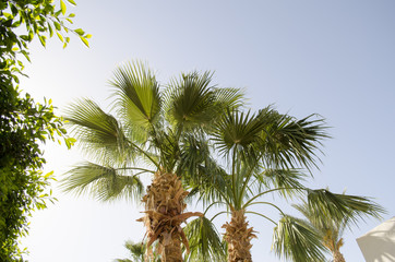 tops of palm trees against the sky