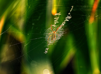 Little spider weaves web on a green background of foliage