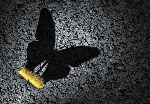 Shadow of butterfly with caterpillar