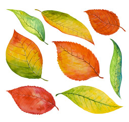 Set of watercolor  autumn leaves, paint texture