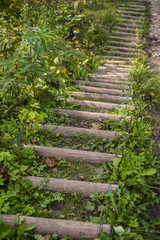 A wooden walkway in the green forest, close-up. Sigulda, Latvia