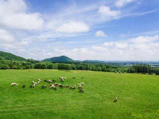 牧場の空撮