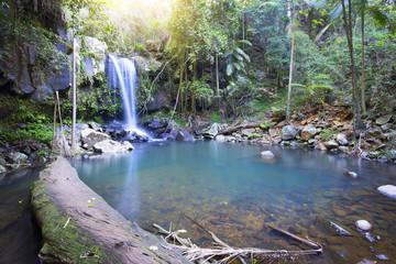 Curtis Falls Rainforest Waterfall Tamborine Mountain Queensland