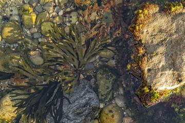 Close up of algae on rock. Marine life.