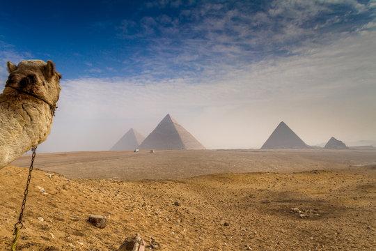 Camel photo bombs the great pyramids of Giza